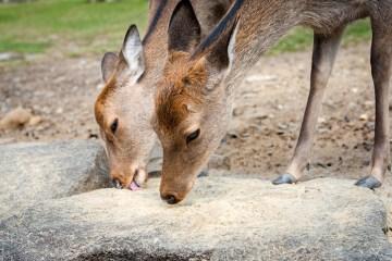 best-deer-attractant-reviews