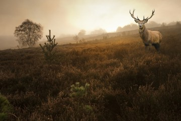 deer hunting tips for archers