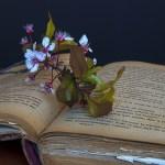 Hvorfor leser vi bøker om igjen og hvilke bøker velger du når du ønsker å lese en bok en gang til?