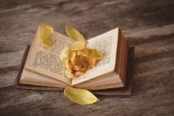 bøker med rose
