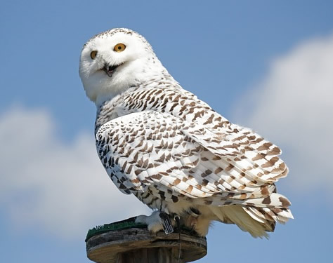 Owl posts