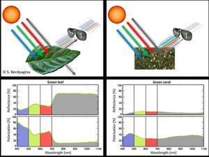 La fotosíntesis y la luz