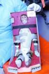 Iran heeft aapje met suborbitale vlucht in de ruimte gebracht – zeggen ze