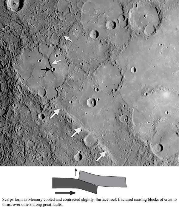Mercury scarps and wrinkle ridges