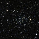 The White Rose Cluster