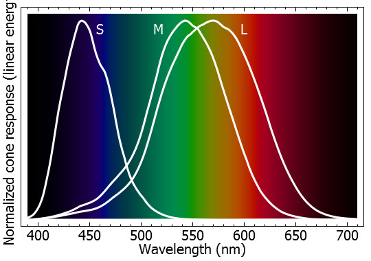 Resposta dos três cones (S, M e L) a diferentes comprimentos de onda