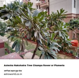 Nakshatra Vanam नक्षत्र वृक्ष Plants & Trees of