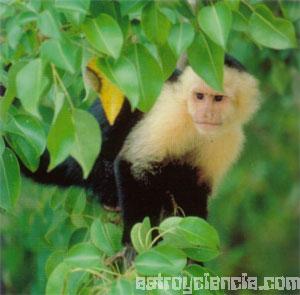 Mono tropical