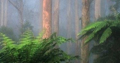 Humedad en la jungla