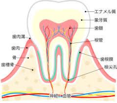 神経を残したい!歯髄温存療法とは?【大阪市都島区内の歯医者|アスヒカル歯科】