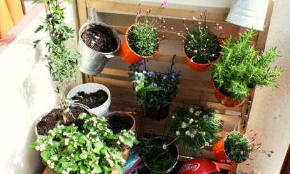 Best Plants to Grow Inside