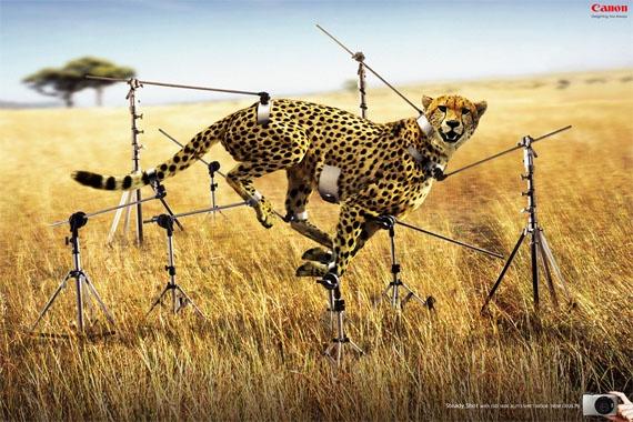 anuncio canon, guepardo