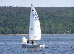 Zugvogel segeln