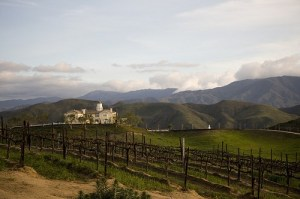 Savor Some Wine In Temecula