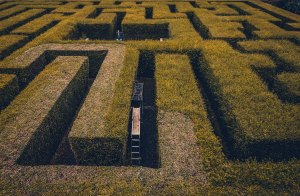 [picture of a maze]