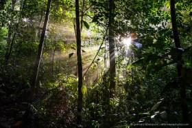 Sun rays penetrating the jungle vegetation at Bako National Park, Borneo