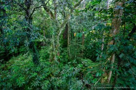Rain forest view from the canopy tree top walk, Mulu National Park, Borneo