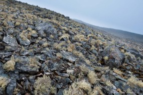 Lichens are one of the few plants that survive in Antarctica. These fragile covers of vegetation grow very slowly. Half Moon Island, Antarctic Peninsula