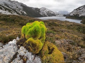 Moss dominates the vegetation of rainy Isla Madre de Dios, Patagonia Chile