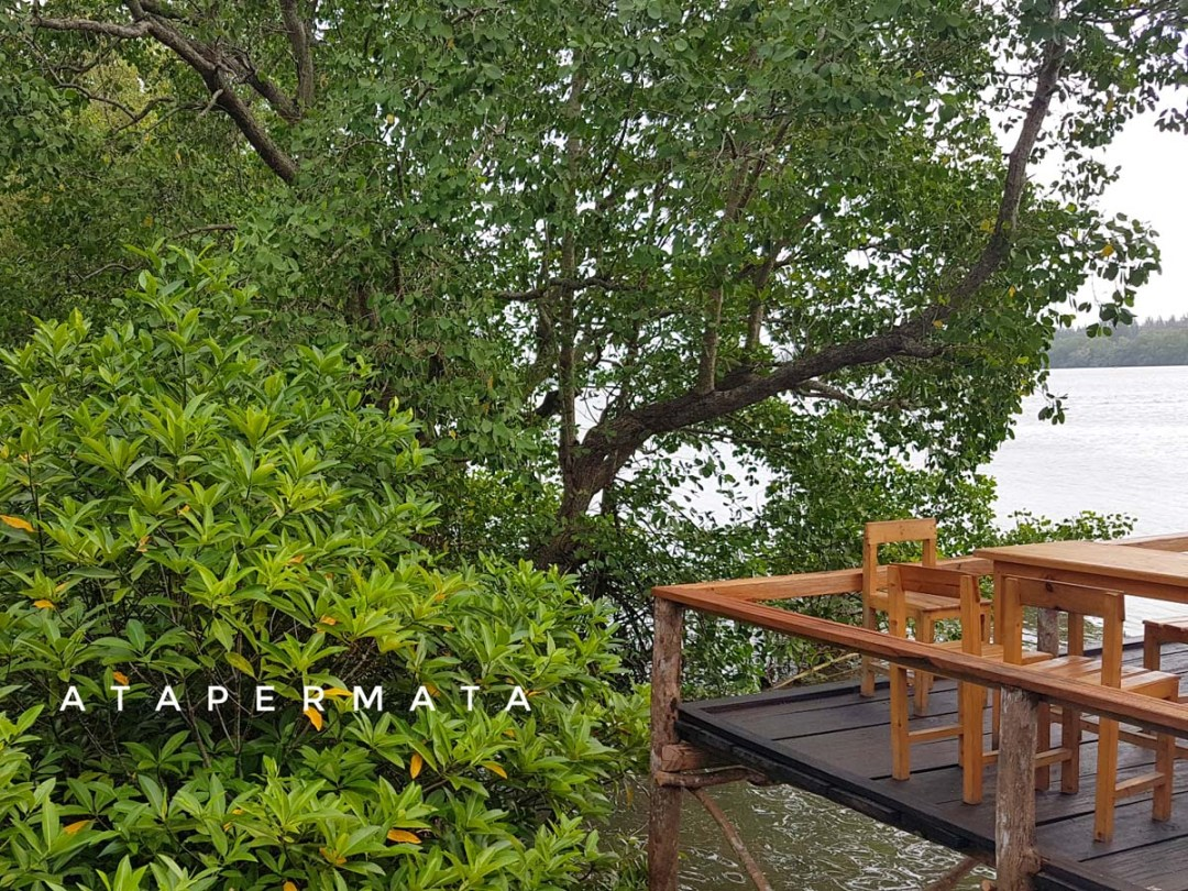 Mangrove Badrika (3)