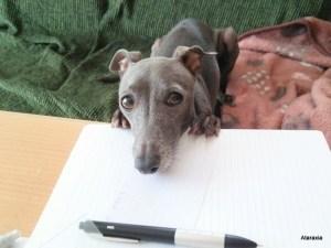 勉強を応援する蓮