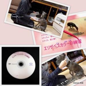 Ataraxiaエリザベスカラー練習用DVD