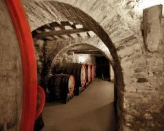 Ciacci Piccolomini cellar