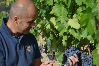 Ciacci Piccolomini vines