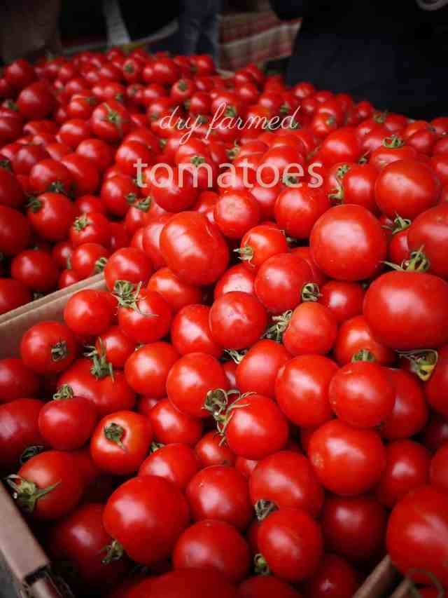 Dry Farmed Tomatoes
