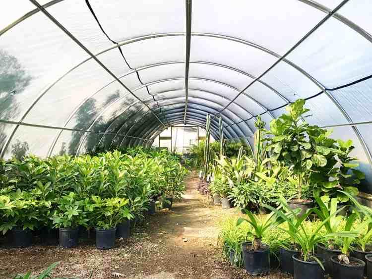 Austin Plant Supply