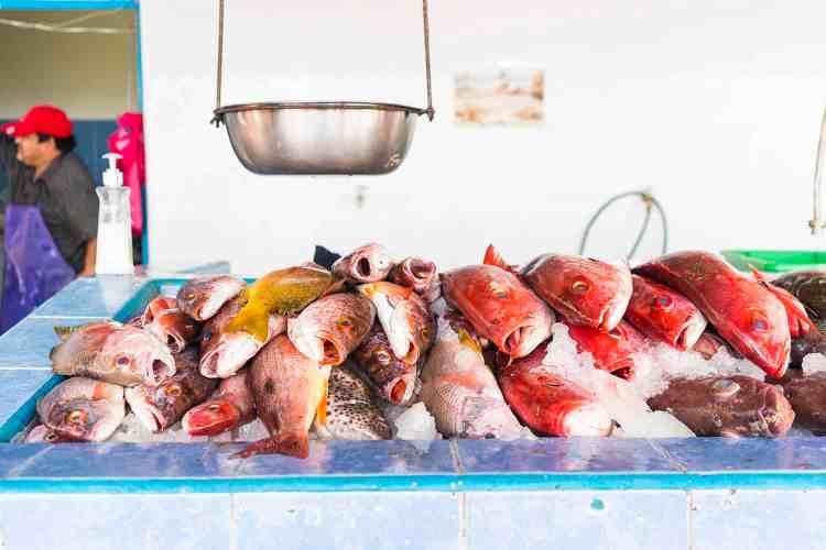 Fish at Mercado de Mar