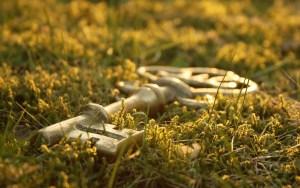 key on grass