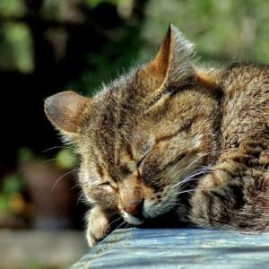 cat-590684_1920 (800x533)