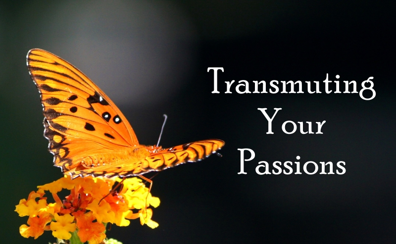 Fortune Cookie Friday: Transmuting Your Passions