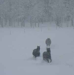 three in the snow