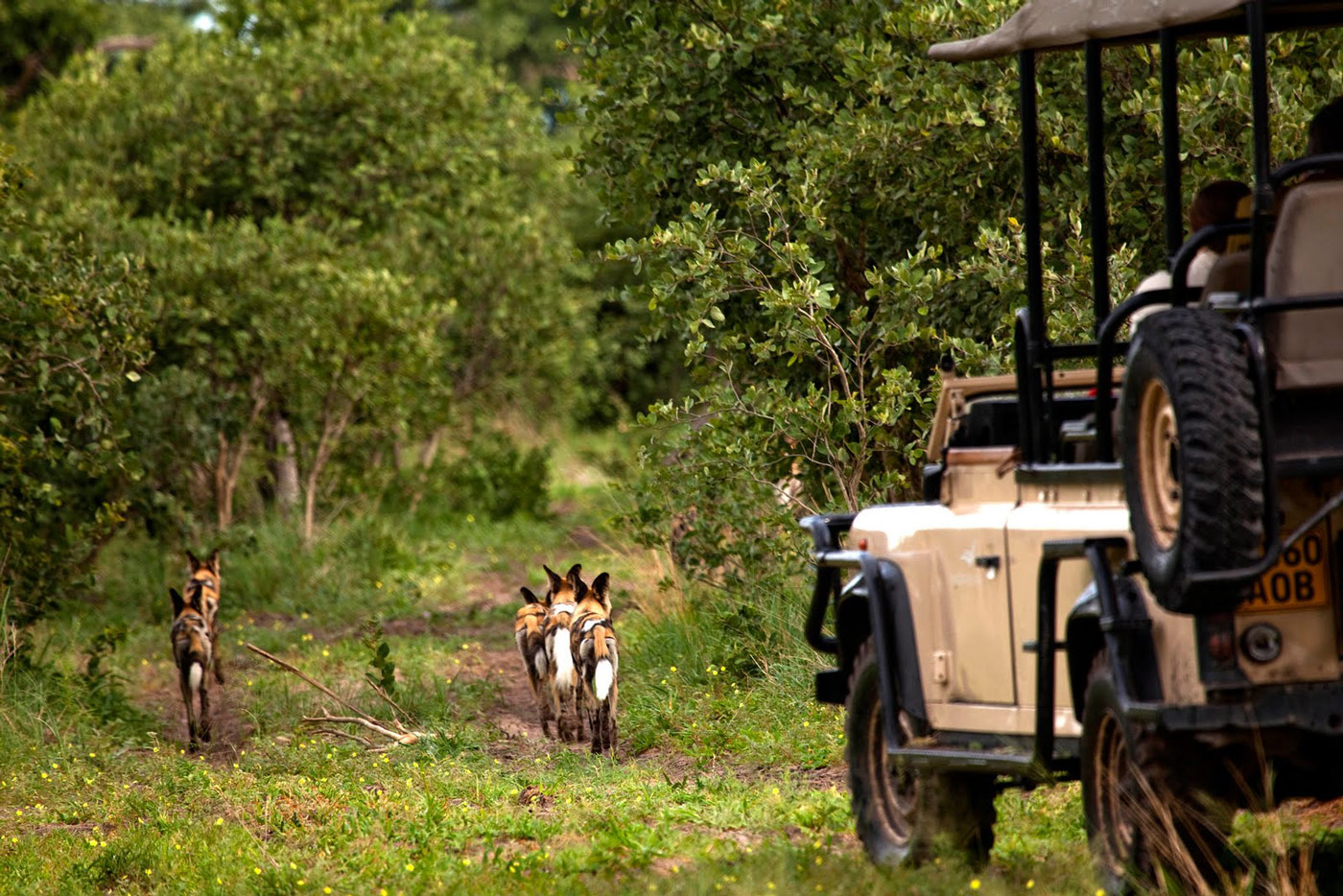 Botswana - Atelier Africa Safaris