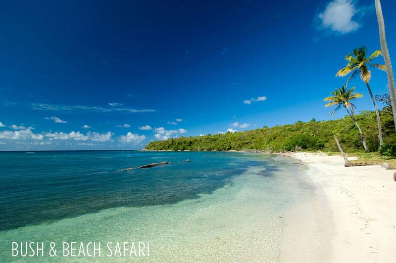 Bush and Beach Safari combination