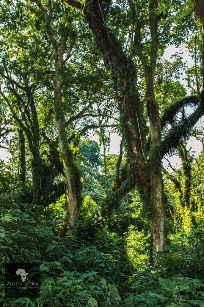 Congo Safari - Jungle