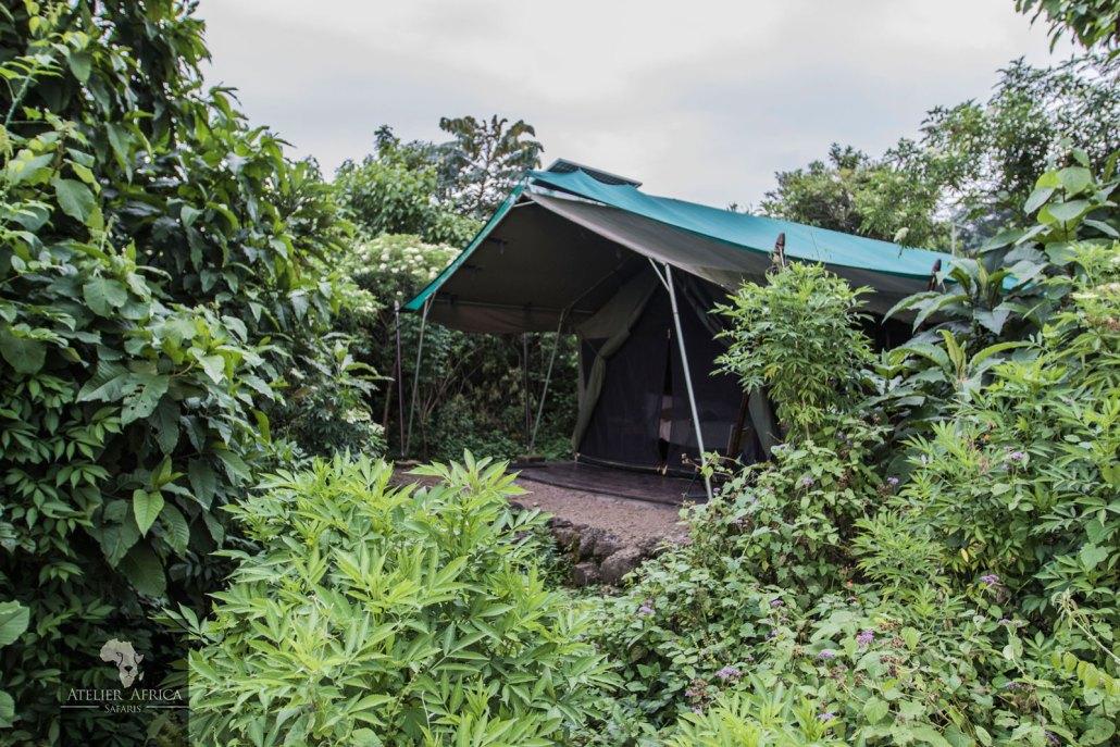 Congo Safari - Bukima Camp
