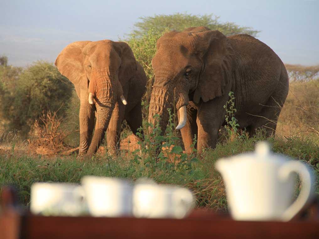 Tawi Lodge Kenya Safari at Amboseli - Kilimanjaro