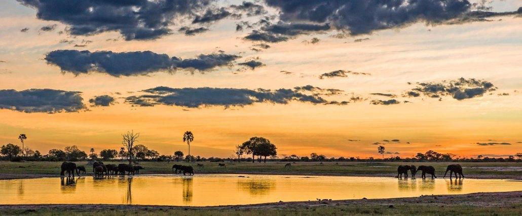 Hwange Zimbabwe Elephants Safari