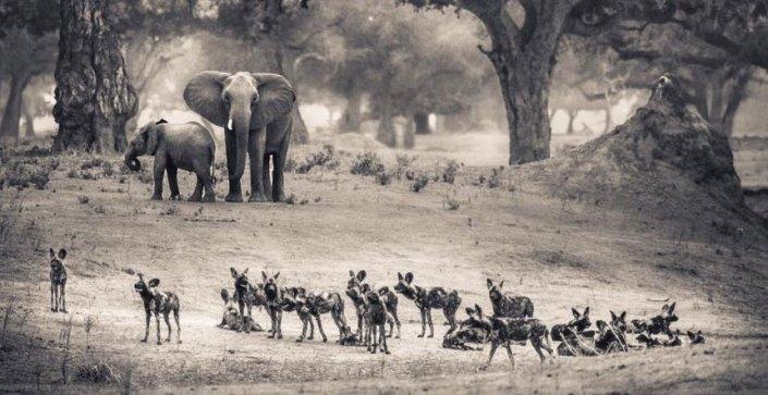 Mana Pools Zimbabwe
