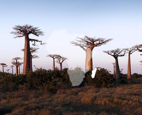 Atelier Afrika Safaris Madagascar