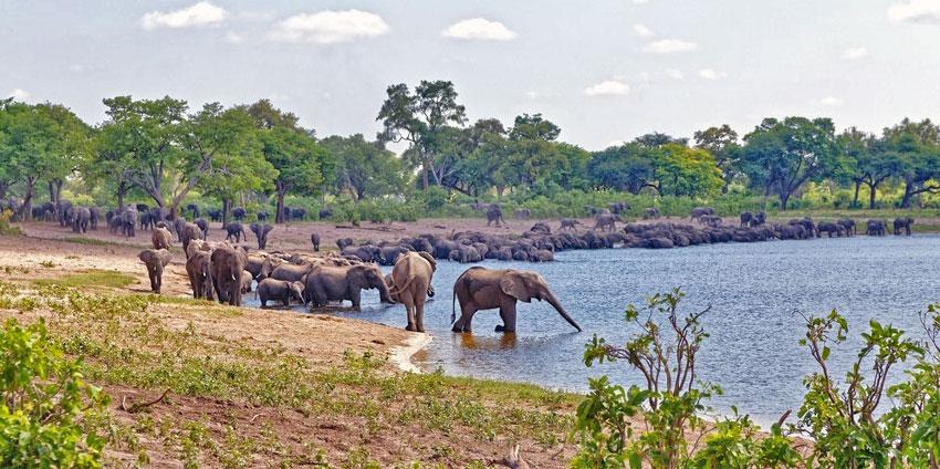 Elephants Horseshoe Nambwa