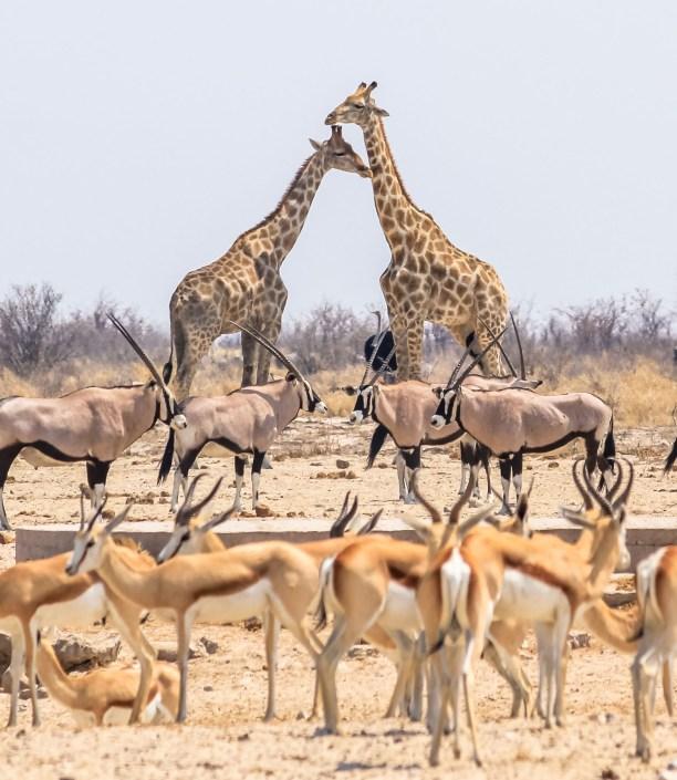 Etosha Namibia Luxury Safari
