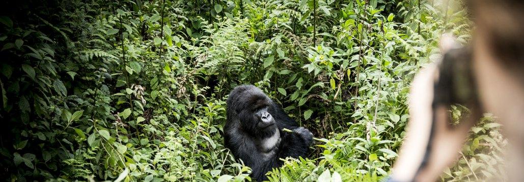 Atelier Africa Safaris, Luxury Safari, Rwanda, Destination, Bisate Lodge