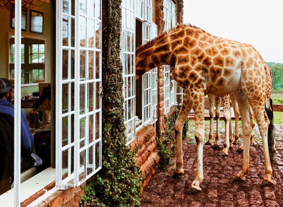 Giraffe Manor, part of your Kenya luxury safari
