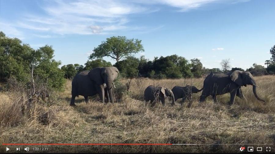 Botswana Safari Video