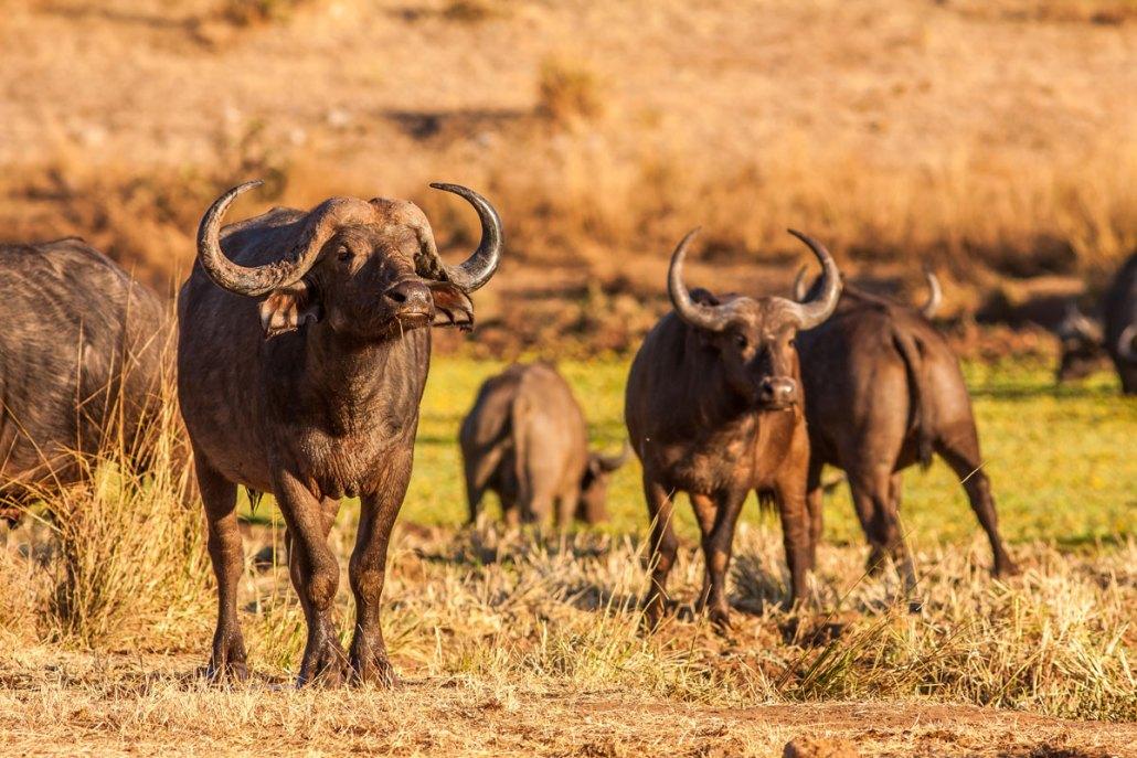 Zambia Safari Park