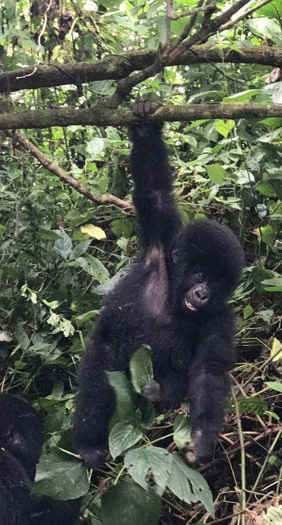 Congo Gorilla trek Virunga